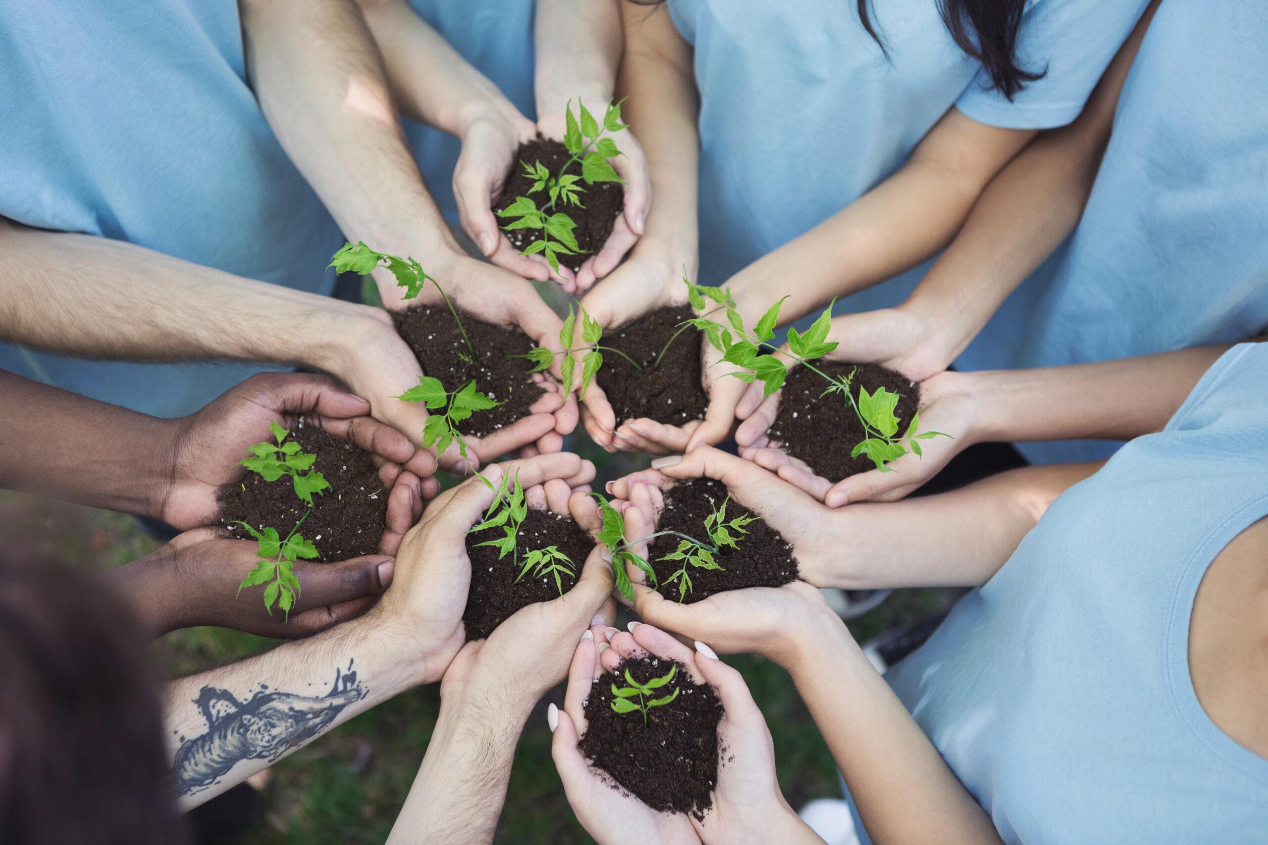 Mehrere Menschen die ihre Hände zur Mitte hin strecken. Sie halten jeder eine handvoll Erde mit kleinen Pflanzen.