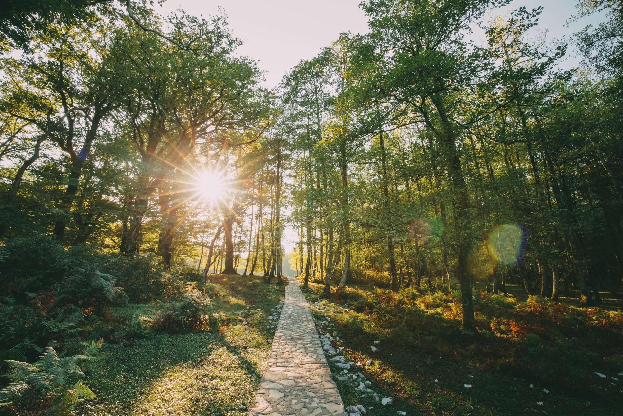 Ein Weg aus weißen Brettern der durch einen Laubwald verläuft, die Sonne scheint durch die Äste.